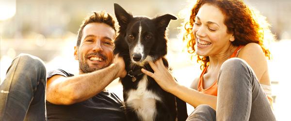 conseils pour adopter un chien soschienperdu. Black Bedroom Furniture Sets. Home Design Ideas