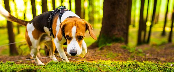 chien perdu en forêt