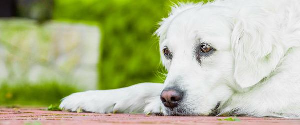 photo chien perdu
