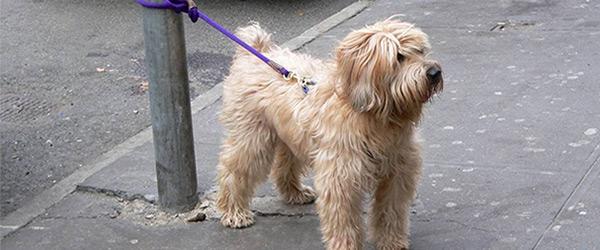 chien attaché poteau